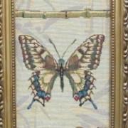 Коллекция бабочек 3